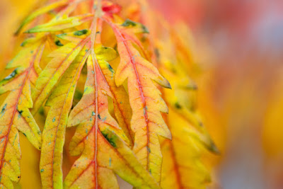 fall leaves, fall colors, aging, changing, life cycle